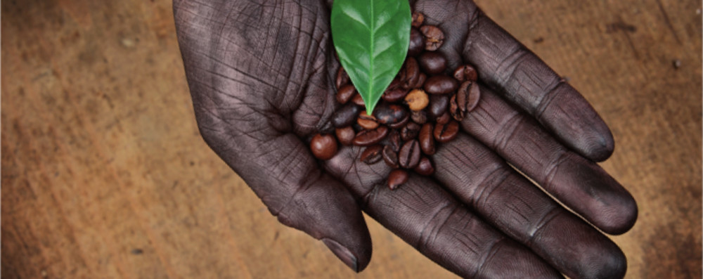 MO-Biofair koffie